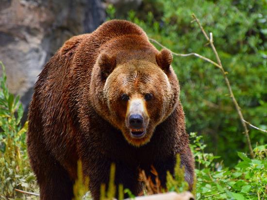 Анекдот про медведя от Юрия Никулина 1