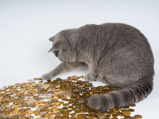 Как псковичам распределить 44,5 миллиона рублей