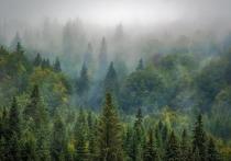 ОНФ и власти КМВ договариваются расширить «зеленый пояс»