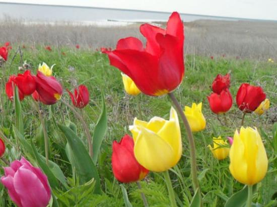 В Калмыкии создадут эко-лагерь Русского географического общества