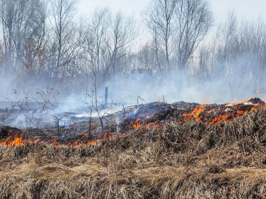 Главная причина пожаров в лесах Мордовии – человеческий фактор
