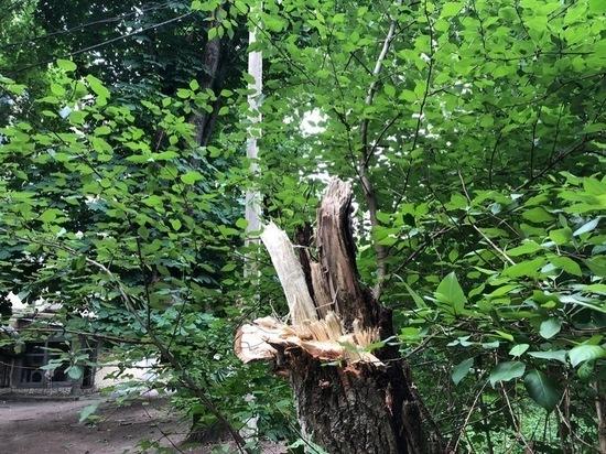В центре Смоленска устраняют последствия падений дерева и столба