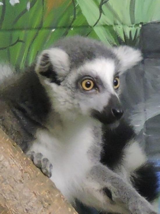 В Ярославском зоопарке появился «узбагоительный» зверь