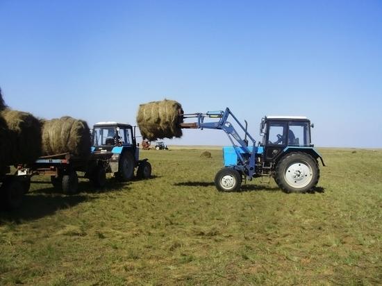 В Калмыкии приступили к заготовке кормов