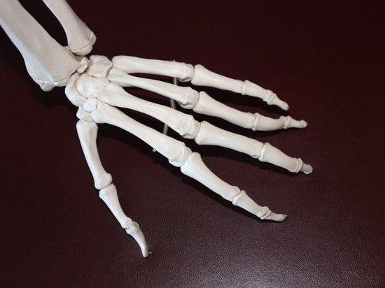 Скелет человека в Ноябрьске обнаружили жители дома