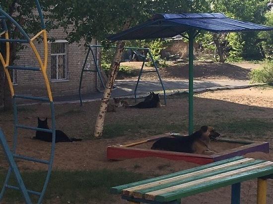 Бродячие собаки оккупировали детскую площадку в Чите