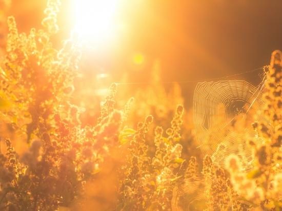 Синоптики обещают Ярославлю жаркий июнь