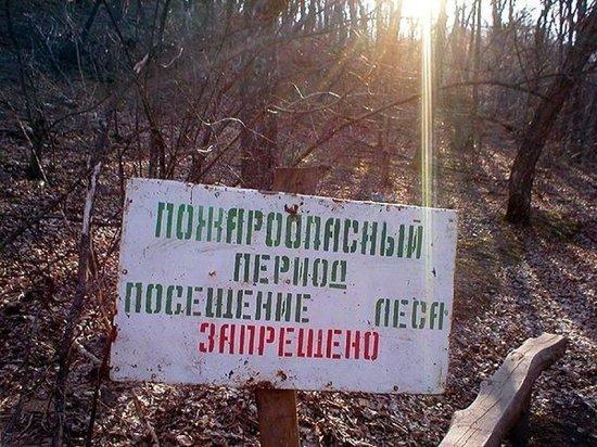 Ярославцам запретили ходить в лес – введен противопожарный режим