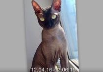 Житель Муравленко заявил об убийстве кота подростками