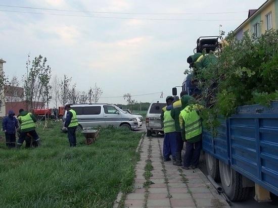 До конца июня в городе высадят около 350 тысяч цветов
