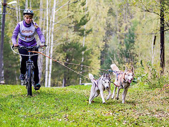 Вся правда о ездовом спорте в Кузбассе