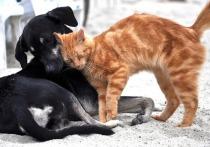 В крупных городах Северной Осетии построят приюты для бродячих животных