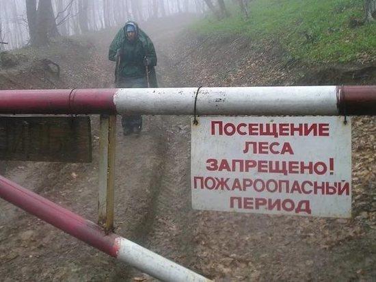 В Тамбовской области ограничено пребывание людей в лесах