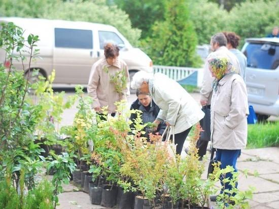 Кировские садоводы могут продавать товар на 8 торговых площадках