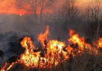В два раза выросла площадь лесных пожаров в Приангарье