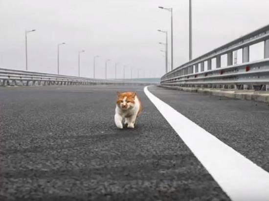 Ротенберг выкупит компанию, проектировавшую Крымский мост