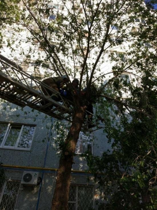 В Оренбурге 30-летняя женщина, прыгнув с девятого этажа, застряла на дереве