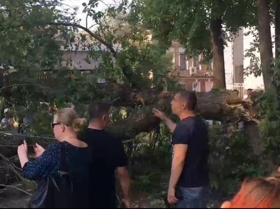 В центре Ярославля в полный штиль упало несколько деревьев