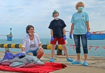 Сочинскому центру спасения дельфинов дадут президентский грант в 2,5 млн