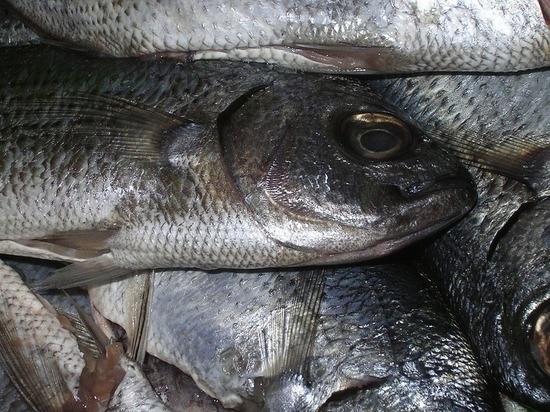 Гибель рыбы в Новомарьевском лимане Ставрополья