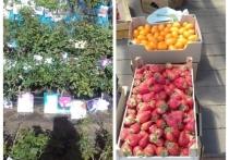 На рынке в Старице запретили продавать розы, клубнику и овощи