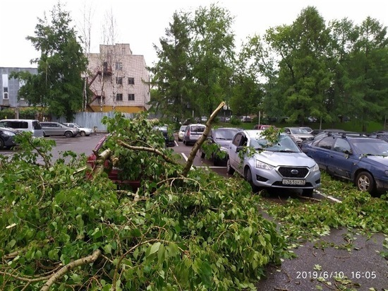 В Кирове во время урагана мужчина пострадал от упавшего дерева