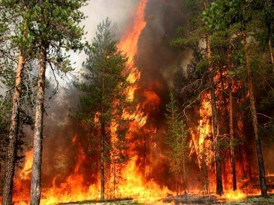 Грозы за сутки уничтожили 12 га леса в Красноярском крае