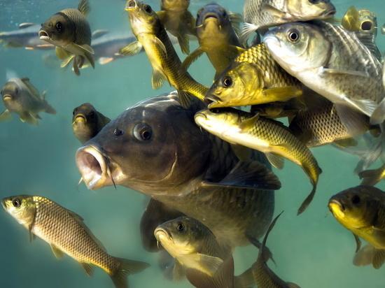 """В абаканском фонтане """"Звезда"""" горожане ловят рыбу"""
