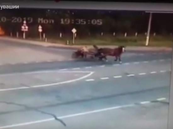 В Чувашии водитель ВАЗа на скорости снес гужевую повозку, погибли двое