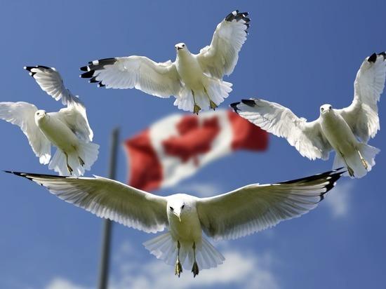 Канада ответила попросившим убежища киселевчанам