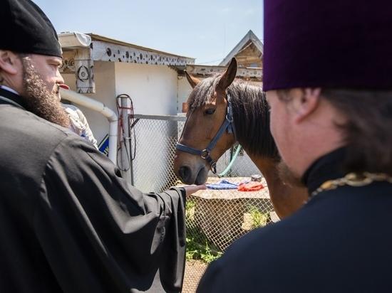 Лошадей для иппотерапии снова угнали на Кавминводах