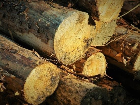 Жителя Карелии насмерть придавило деревом в лесу