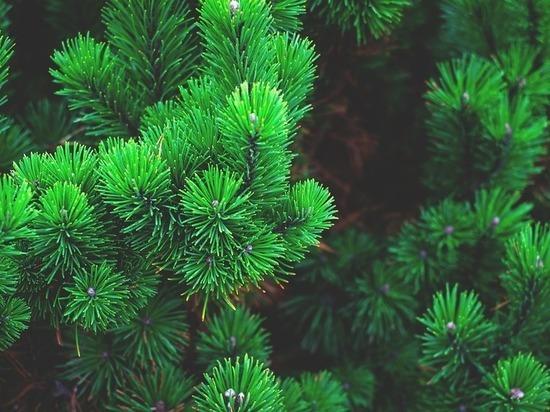 В Казани восстанавливают лес на «Лебяжьем»