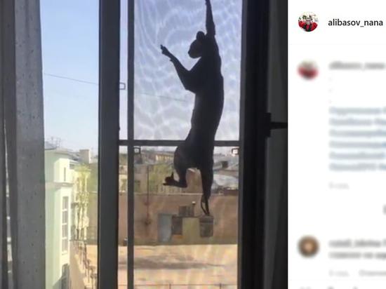 За пропавшего кота Бари Алибасова объявлено вознаграждение