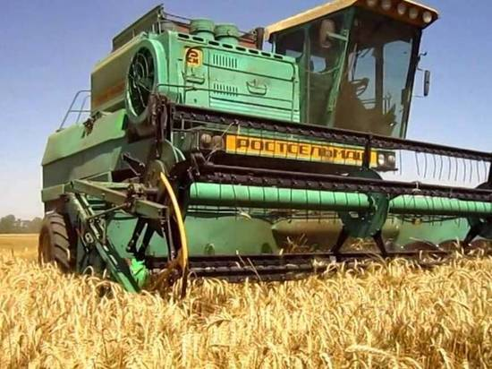Со следующей недели в Крыму массово начнут убирать хлеб: планы на урожай