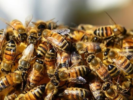 Что массово убивает пчел в Алексинском районе Тульской области