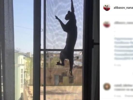 Сын Алибасова попросил врачей не сообщать о пропаже кота Чучи