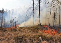 В двух районах Ивановской области высок риск возникновения лесных пожаров