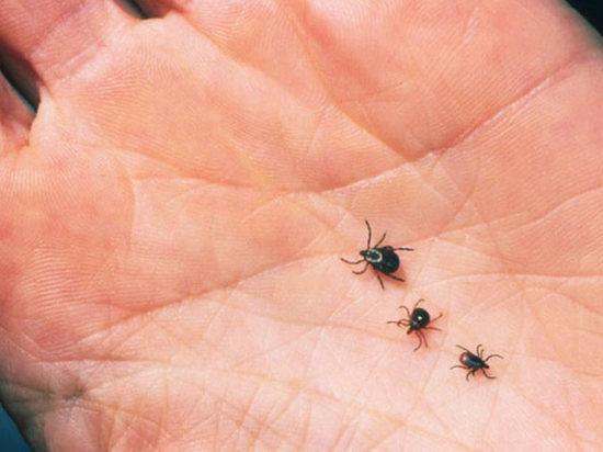 В Калмыкии число пострадавших от укусов клеща выросло
