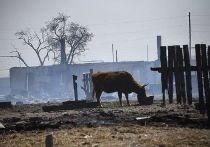 Почти 821 млн рублей получат пострадавшие от пожаров аграрии Забайкалья