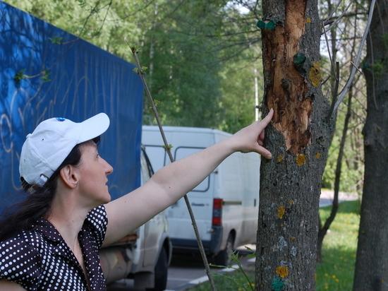 Сотрудников парков научат правильно искать вредителей деревьев