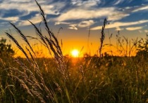 «Желто-оранжевые» регионы ЦФО сильно рискуют без дождя