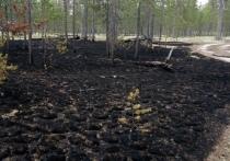 В Муравленко сгорел участок леса