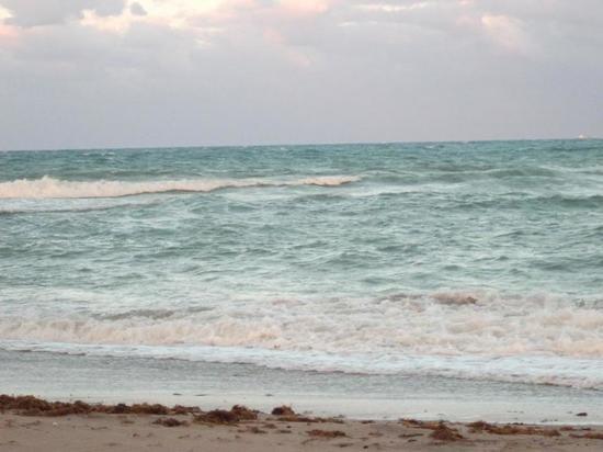 """Климатологи предсказали появление """"мертвой зоны"""" в Мексиканском заливе"""