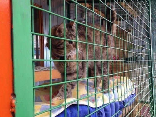 Зоозащитники раскритиковали закон о животных: «Деньги для приютов разворовываются»