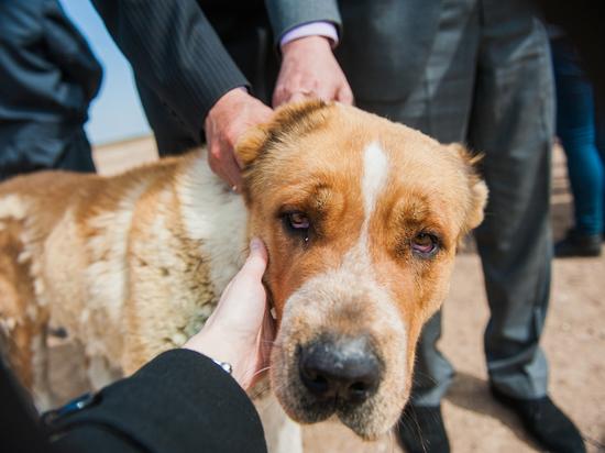 В Астрахани застрелили собак и оставили трупы на всеобщее обозрение