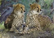 Казанский зоопарк «Река Замбези» должен открыться в конце августа