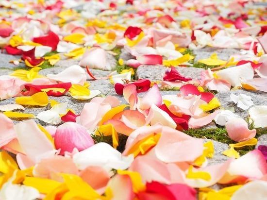 В Ессентуках накажут виновных в перекрытии дороги свадебным кортежем