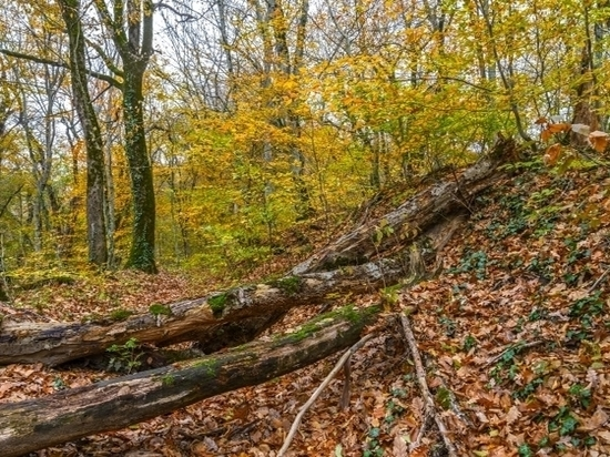 Не мытьем, так катаньем: Компания «МТК-Дженькей» снова объявилась в лесах Бурятии