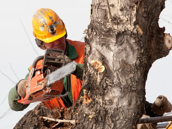 Кемеровчан возмутила вырубка деревьев на Весенней